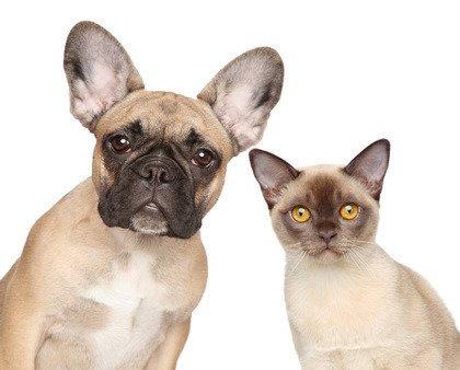 Fototapeta Jak Kot I Pies 1092 Oklejajpl